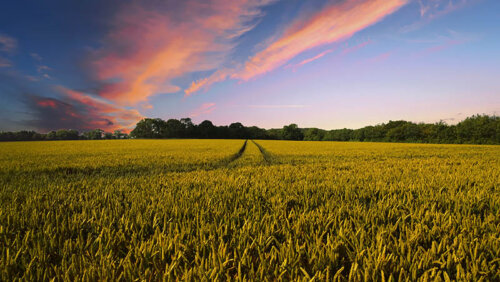 קרקע חקלאית מדריך